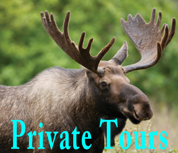 Alltrans National Park Private Tours
